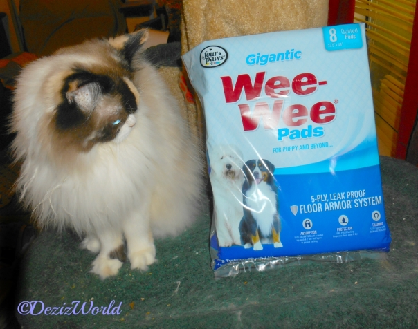Raena stands on cat tree looking at wee wee piddle pads