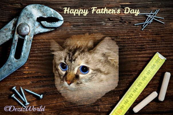 Dezi in a wood plank frame with tools for Father's day