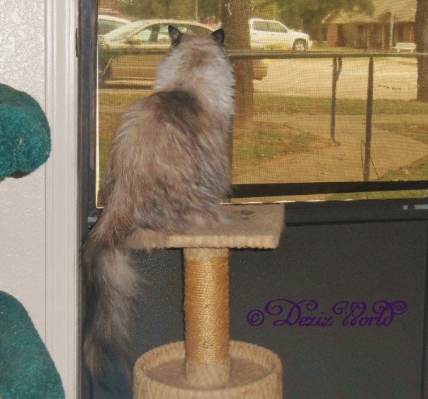 Dezi sits on small perch looking outside