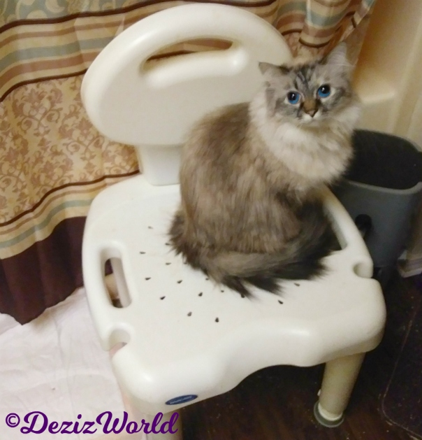 Dezi sits on shower chair looking up