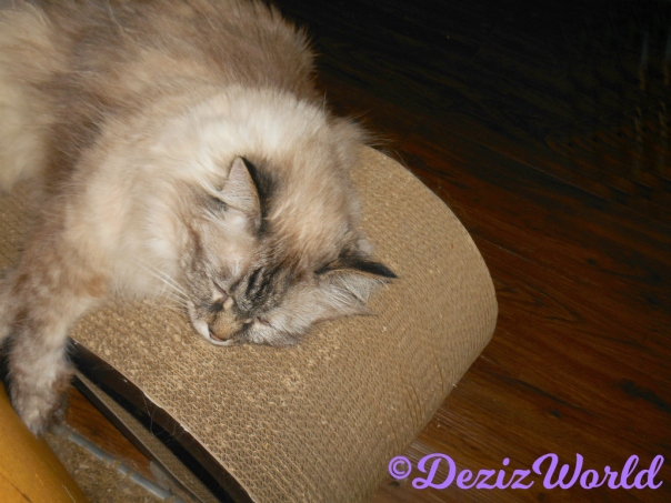 Dezi lays sleeping on cat scratcher