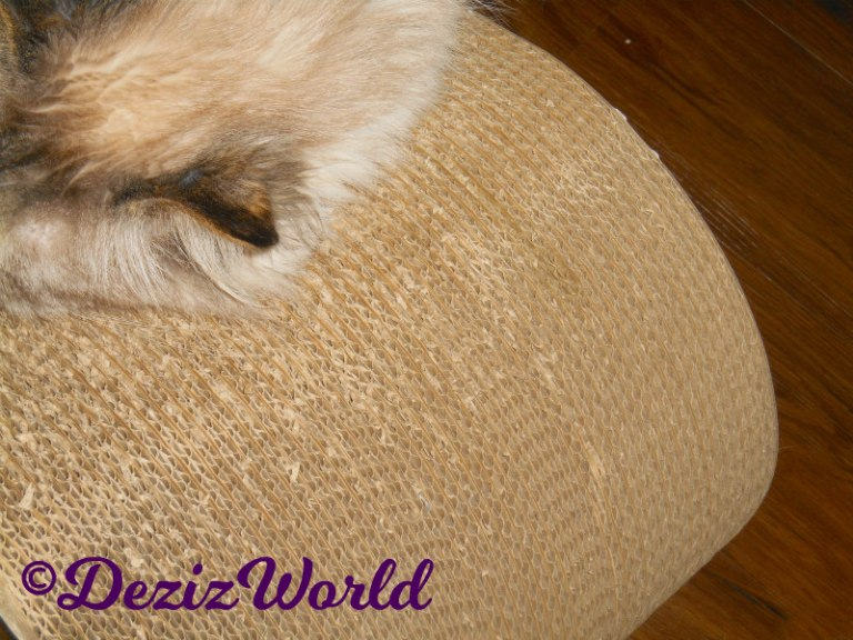 Blooper- Dezi's head while she lays on scratcher.