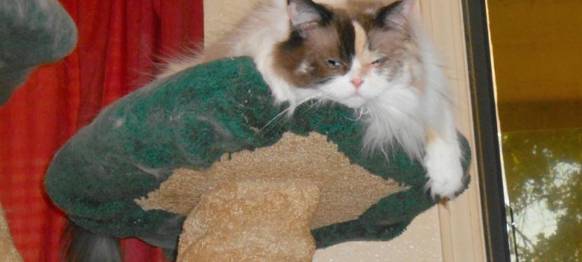 Chatting Cats: Bearing TheHeat