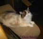 Chatting Cats: Kitties Don't Go ToJail