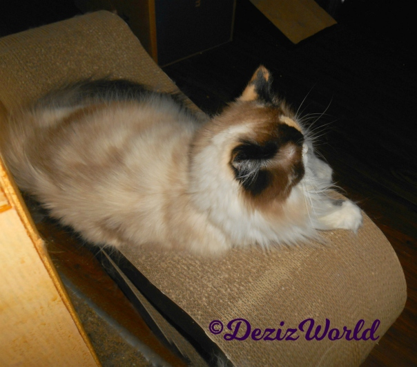 Raena lays on scratching pad