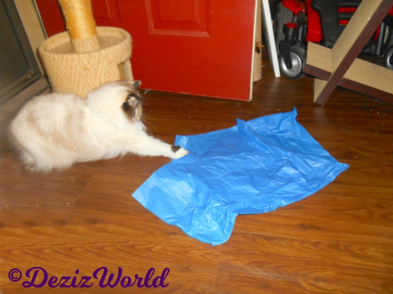 Raena reaches for the jitterbug toy under the crepe paper