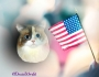 Chatting Cats: Happy Independence Day