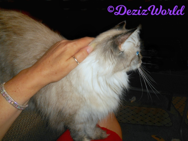 Dezi gets loving standing on mommy's lap
