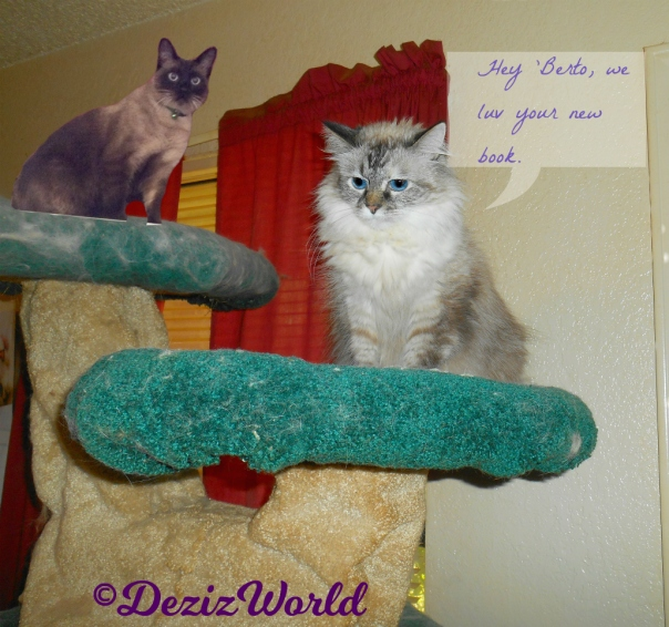 Dezi and Alberto sit atop the liberty cat tree