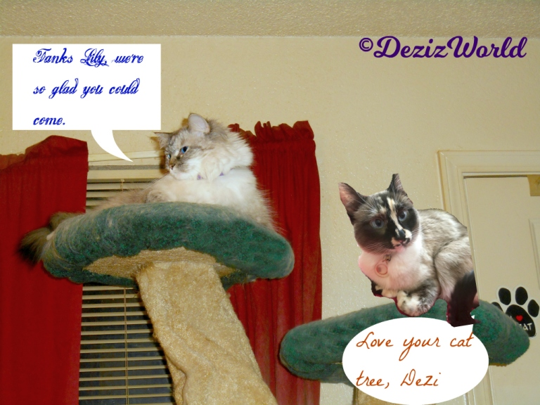 Dezi and Lily lay atop the liberty cat tree