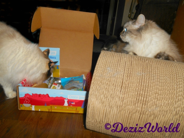 Dezi and Raena check out the Made in the USA goody box from Chewy