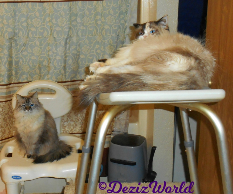 Dezi sits on shower chair and Raena lays on shower bench