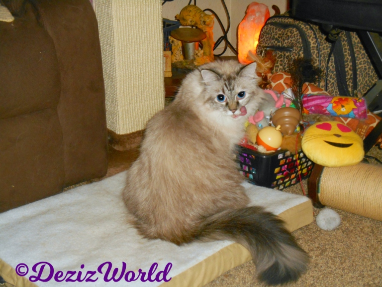 Dezi looks over shoulder from the toy box