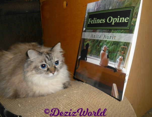 Dezi lays on scratcher with the book Felines Opine