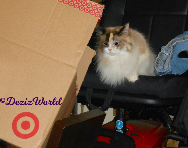 Raena lays in the wheelchair looking at box