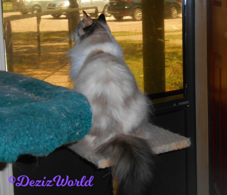 Raena looks out the door from the small cat perch