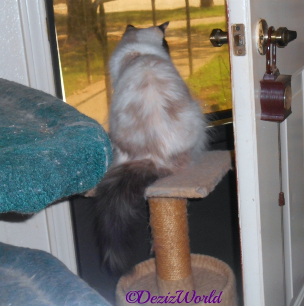 Raena sits on perch looking out the door