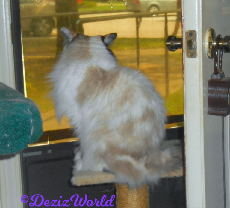 Close up of Raena sitting on perch and looking out door