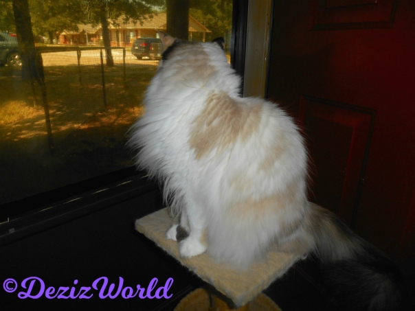 Raena sits on small perch looking out door