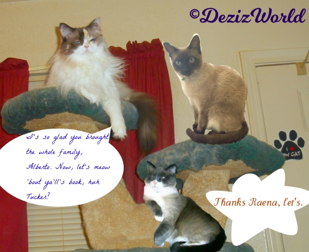 Raena, Alberto and Tucker lay atop the liberty cat tree