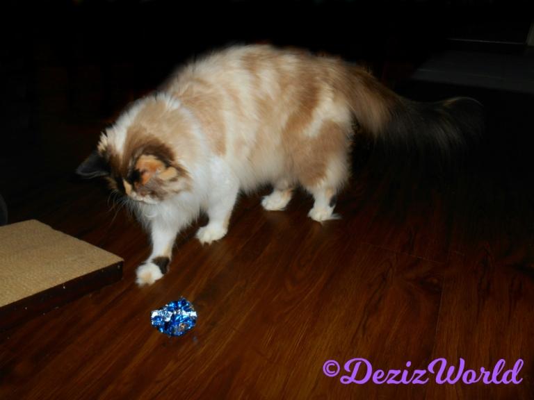 Raena bats the crinkle ball