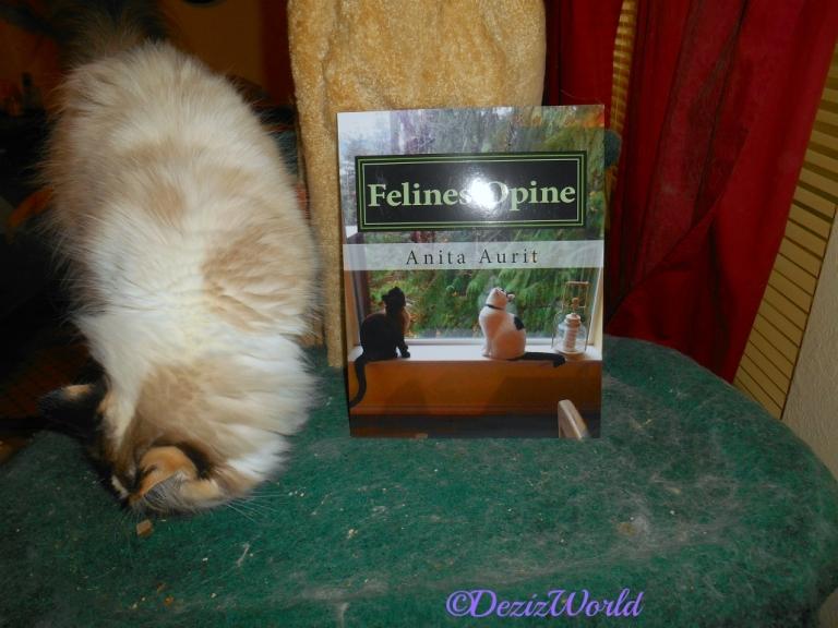 Raena on cat tree with Felines Opine book