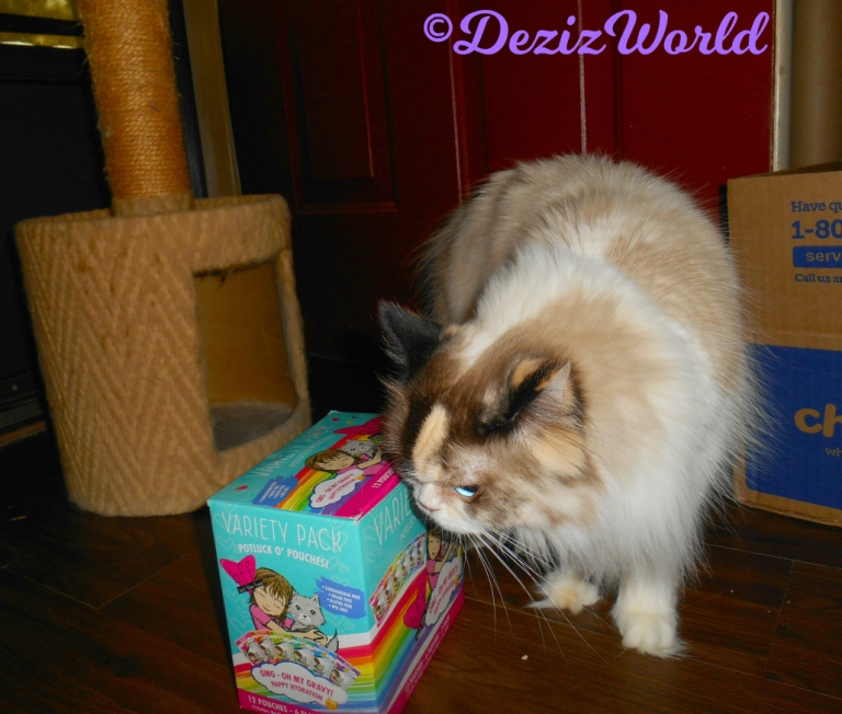 Raena sniffs Weruva BFF cat food box