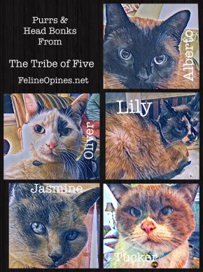 Feline Opines collage photo