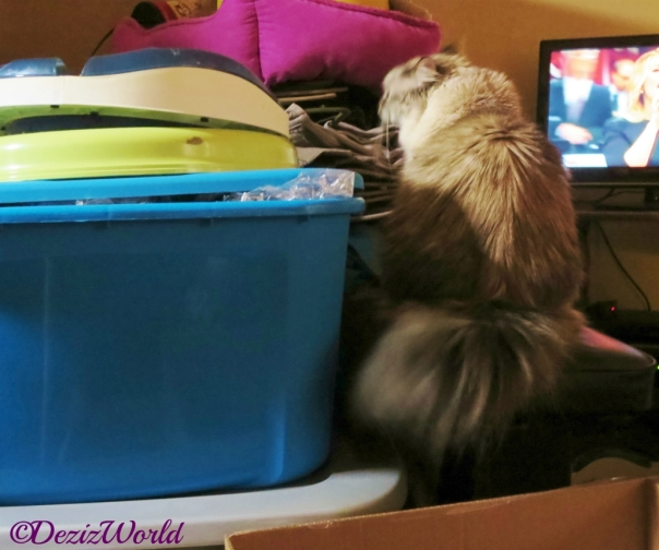 Dezi climbs among the packed boxes during the flood on 2014