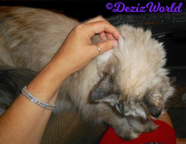 Dezi gets loving while standing on mommy's lap