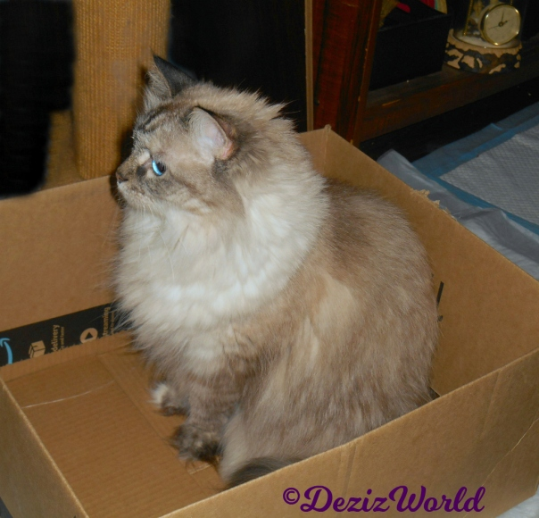 Dezi profile sitting in amazon box