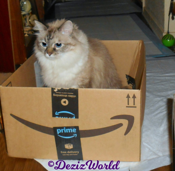 Dezi sits in amazon box