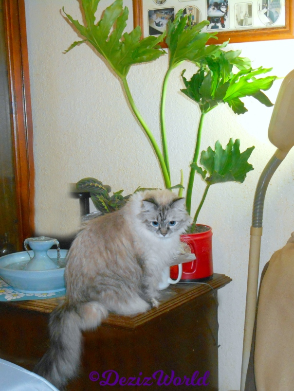 Dezi sits on table with plants and fountain