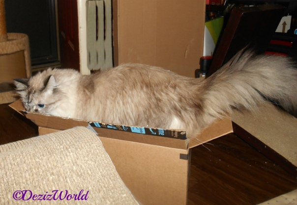 Dezi stands in box