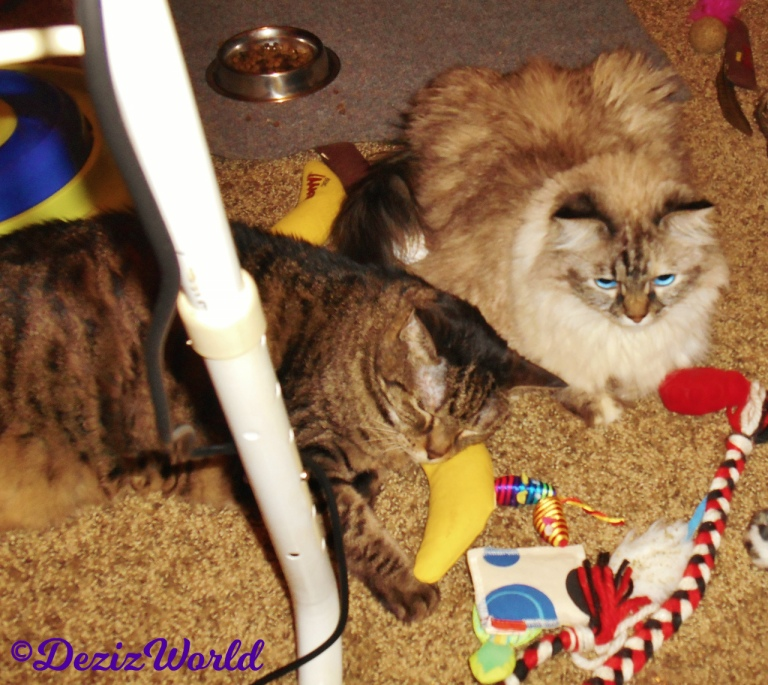 Dezi and Lexi play together