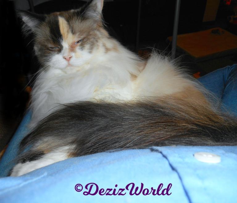 Raena sleeps in mommy's lap