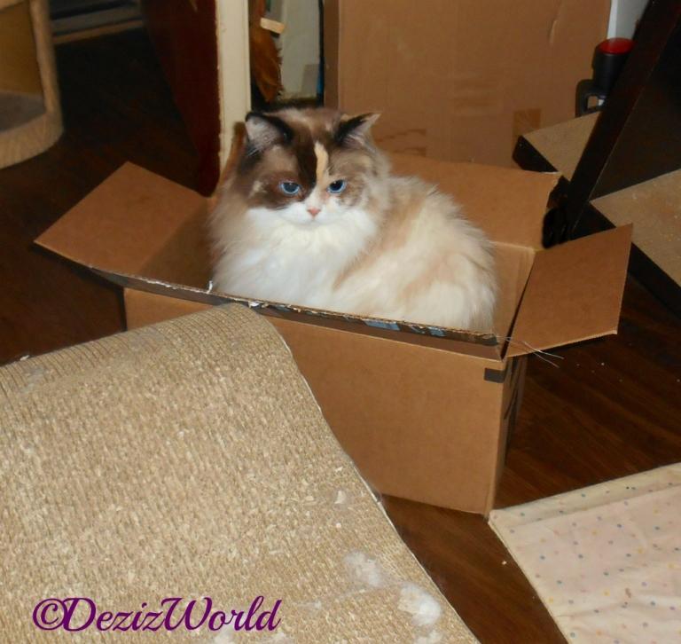 Raena sits in box