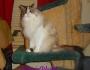 Chatting Cats: Chats Around TheTracks