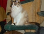 Chatting Cats: Raena's New Plan 2 #PurrsWithAPurr-Puss