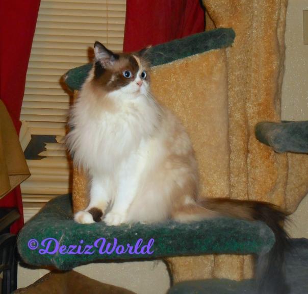 Raena's profile while sitting on cat tree
