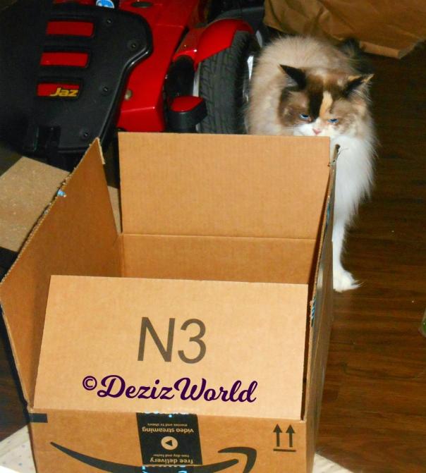 Raena sniffs box
