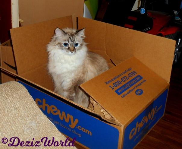 Dezi sits in chewy box