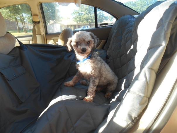 Niggy on car seat cover