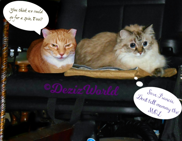 Dezi and Prancie lay in the wheelchair chatting