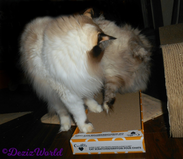 Dezi and Raena argue over the ourpets scratcher