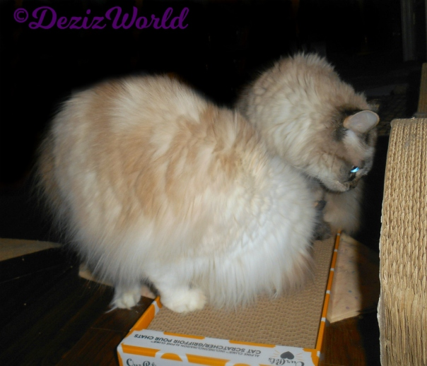 Dezi and Raena sniff the ourpets cat scratcher