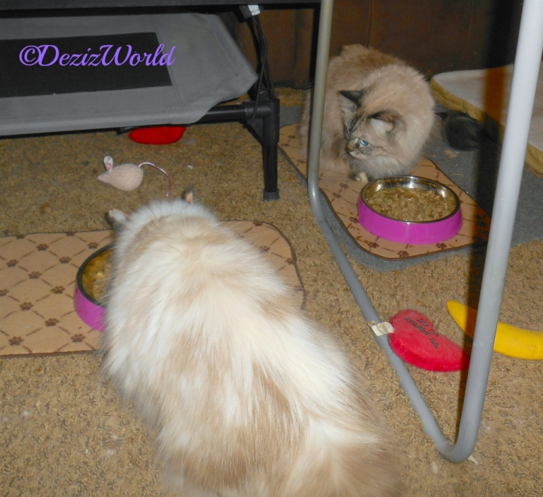 Dezi and Raena eat out of their new dishes