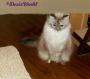 Chatting Cats: Feline FridayPlans