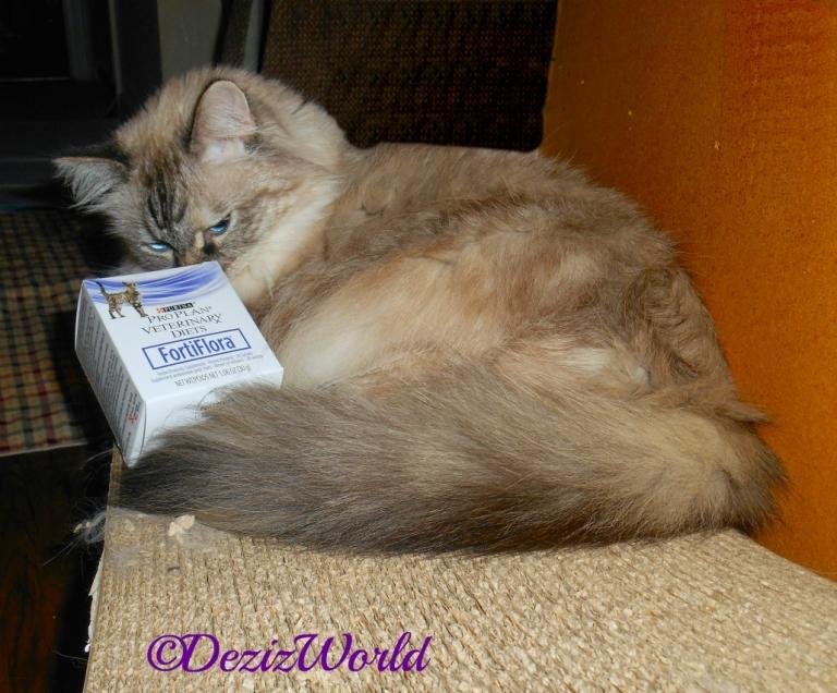 Dezi sniffs the box of Fortiflora