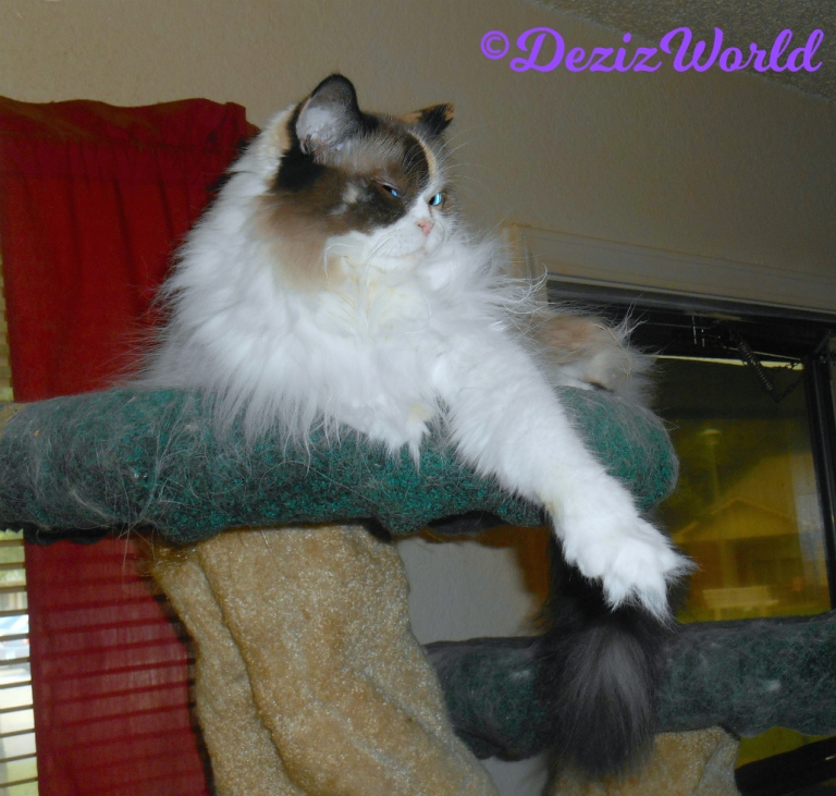 Raena lays atop cat tree with arm outstretched